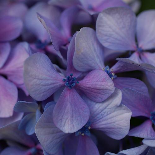 Fleurs et jardin